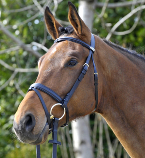 The Waterford Bridle from Stübben