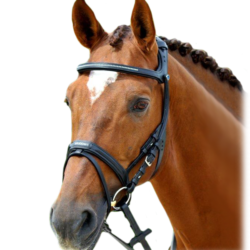 Sale Bridles & Accessories