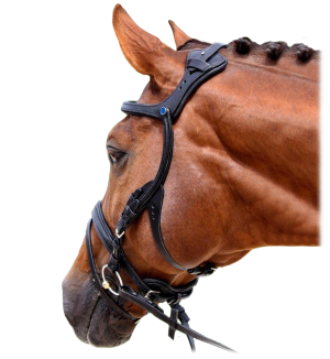 The Freedom Bridle from Stubben