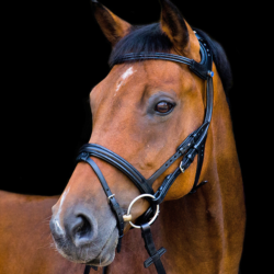The Freedom Bridle from Stübben
