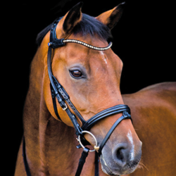 The Freedom Magic Tack Bridle from Stübben