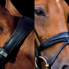 The Switch Bridle from Stübben